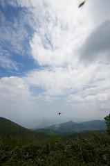 ブヨ天国の春香山山頂