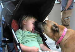 Good night kiss  :-) (Eldad Hagar (Please support Hope For Paws)) Tags: rescue dog baby love animal loving kids book losangeles kid kiss kissing day babies stroller sophie lick valentines auggie doggies doggie hagar rescuing eldad eldadhagar 100commentgroup hopeforpaws ourliveshavegonetothedogs captionable