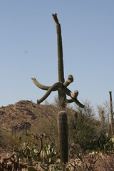 IMG_0802 (quinn.anya) Tags: arizona cactus saguaronationalpark