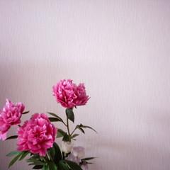 【写真】ミニデジで撮影した芍薬の花