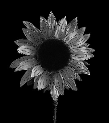 Etched Sunflower