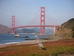 Baker Beach -- Great Blue Heron #2 (wanderingYew2 (thanks for 5M+ views!)) Tags: sanfrancisco california bridge bird beach heron goldengatebridge bakerbeach presidio us101 pacificcoasthighway californiahighway1 ca1 nationalscenicbyway allamericanroad unitedstateshighway101