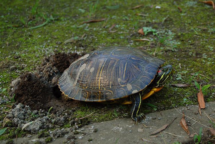 _tortoise-3_