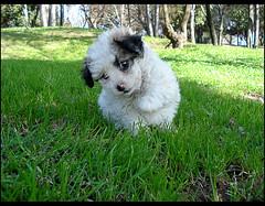 Cosita Saludando (Errlucho) Tags: rboles perro cachorro hermosa mascota cosita perrita cesped ar1 simptica errlucho