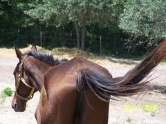 Ben 2008 5-16c (lcpphotographytx) Tags: bigben horseequine recoveredequine