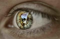 Mirada al futuro (Fernando Rey) Tags: iris color macro reflection eye beauty look ojo future reflejo mirada soe belleza futuro