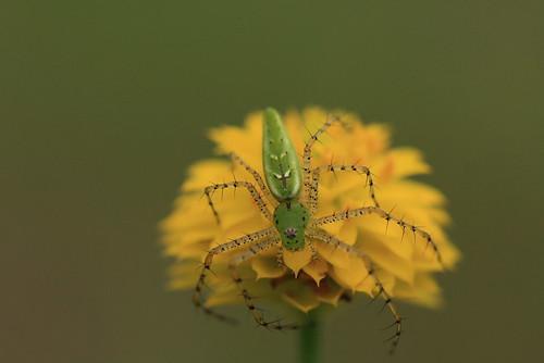 JD Spider
