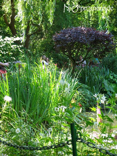 你拍攝的 Jardin de Monet。