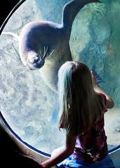Close Encounter (Dean of Photography) Tags: portrait aquarium seal thumbsup aquariumofthepacific californiasealion bigmomma photofaceoffwinner photofaceoffplatinum pfogold pfoplatinum aopcontest0806 herowinner thepinnaclehof tphofweek22