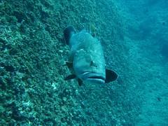 IMG_2038 (Rayas Diving) Tags: medas illes 27072008