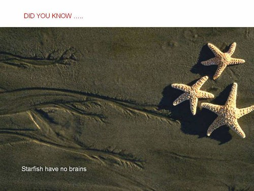 interesting facts starfish