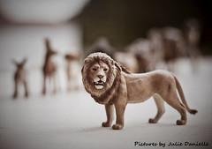 Simba..all grown up (Julie Danielle) Tags: animals wednesday toy happy bokeh lion toylion ilovebokeh hbw toybokeh