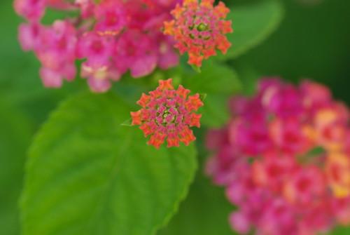20080803065花