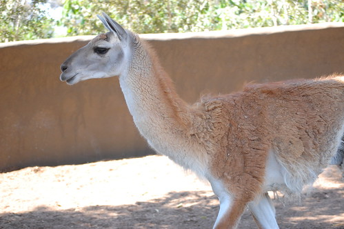 zoo 043