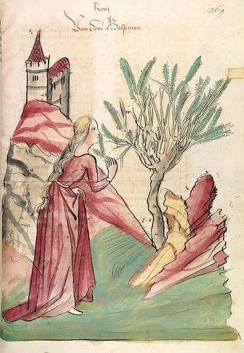 10-fol. 269r - El arbol del balsamo