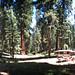 Camp 60