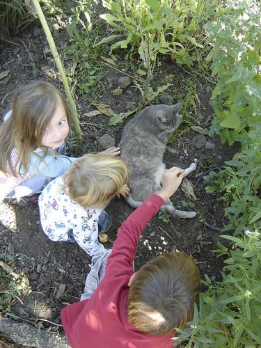 Cat in WFB garden