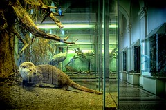 Night in the Museum (Batram) Tags: animals museum night bravo gotha hdr firstquality naturkundemuseum batram visiongroup vision100