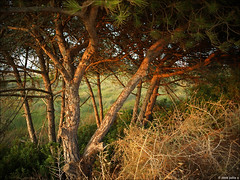 the last summer light (julioc.) Tags: wood autumn trees red portugal nature beautiful faro quality pines algarve riaformosa e510 julioc challengeyouwinner photographybyjulioctheblog olympuse510 ilustrarportugal pfogold srieouro damniwishidtakenthat j1024