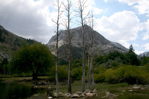 Lundy Lake Trees