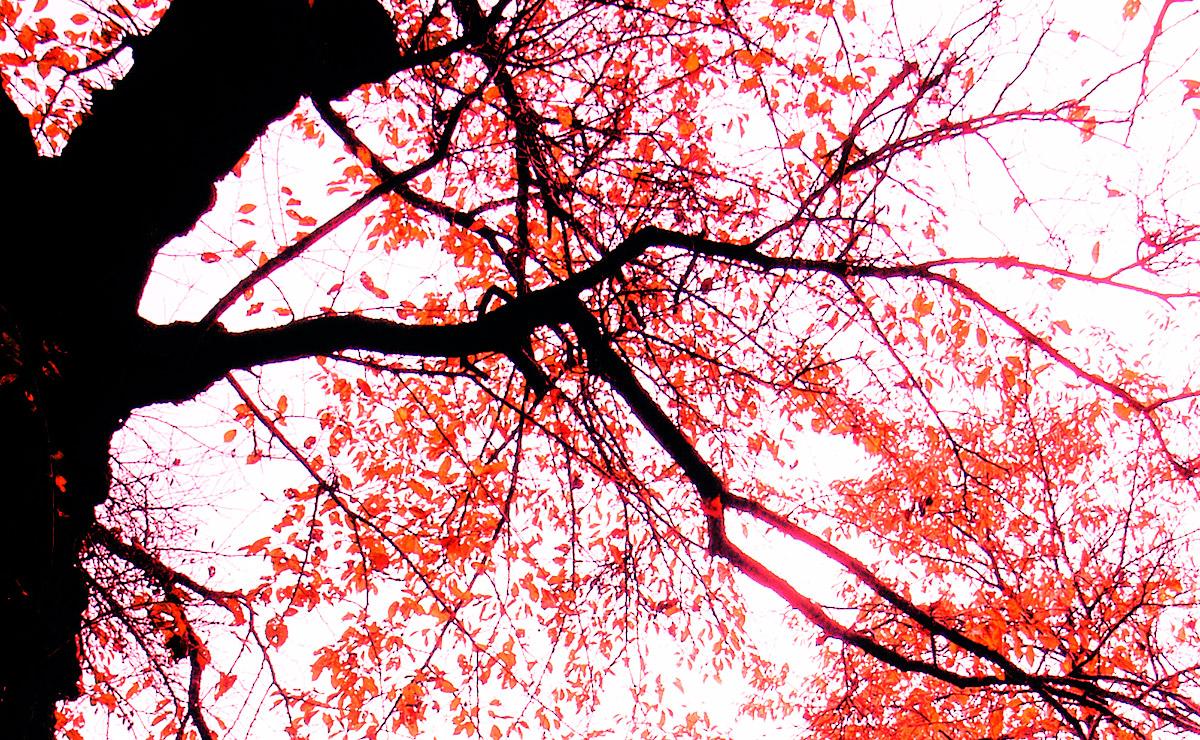 天目山・景徳院 autumn leaves at KEITOKUIN(temple)