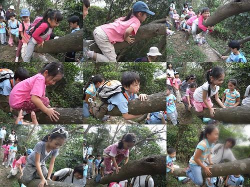 你拍攝的 25爬樹。