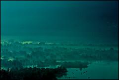 bolle e nebbia (mbeo) Tags: fog schweiz switzerland ticino foto suisse natura photograph svizzera nebbia paesaggi lagomaggiore controsole bolledimagadino mbeo
