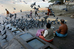 feeding time | Kolkata (arnabchat) Tags: morning people india birds composition flying feeding pigeons crows favs kolkata bengal calcutta bangla ganga westbengal hooghly ghaat arnabchat arnabchatterjee