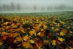 Fog and the Autumn (Mayastar) Tags: park autumn leaves fog glasgow alexandrapark dedicatedshot mayastar autumnincoloursforonce