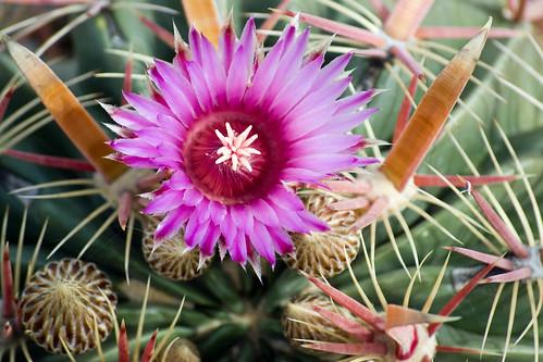 Autumn Cactus Blossom