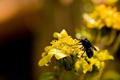 Fly By (Darrell Lawrence ( darrelllawrence.com )) Tags: nature closeup nikon amateur d300 topshots 105vr bokehwhores macrophotosnolimits~votenow