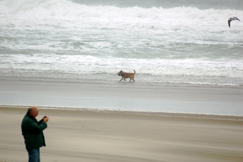 beach_man_dog_bird_501x333_enhanced
