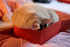 Gatto in scatola