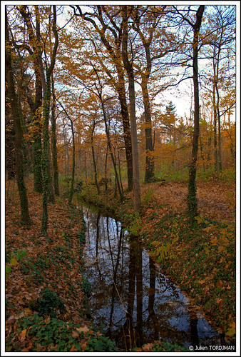 La forêt en automne / Autumn in forest