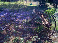 It's that time of year - Jacaranda losing colour (David T Jones) Tags: farm swing jacaranda paddock