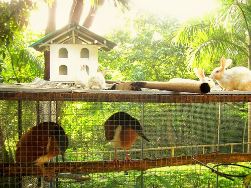 Cebu City Zoo by you.
