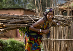 Daily hard work in Borana - Ethiopia (Eric Lafforgue) Tags: africa wood woman work artistic african hard tribal ornament bodypainting rough ethiopia tribe heavy ethnic rite carry bois tribo adornment pigments tribu omo eastafrica thiopien etiopia ethiopie etiopa 0335 tribalgirl lafforgue  etiopija ethnie ethiopi  etiopien etipia  etiyopya  southethiopia nomadicpeople   tribalgirls       bienvenuedansmatribu peoplesoftheomovalley