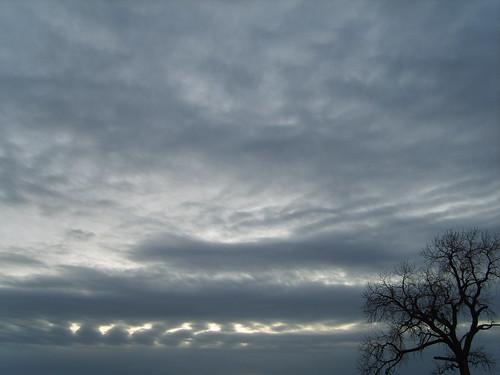 Tree at dusk 11/30/08