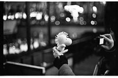 Woodstock (patrickjoust) Tags: new york city urban usa ny slr film ice night america 35mm lens ed 50mm prime us reflex nikon focus flickr asahi pentax takumar kodak tmax scanner manhattan f14 united patrick peanuts super center scan iso midtown v f single m42 rink spotmatic states manual rockefeller 50 woodstock joust 35 3200 coolscan estados scating screwmount unidos autaut lovelycity patrickjoust