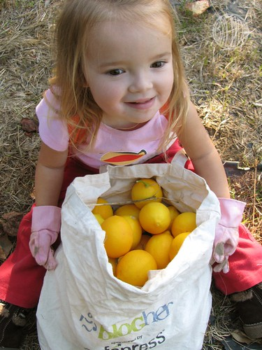 a big ol' bag o' lemons!
