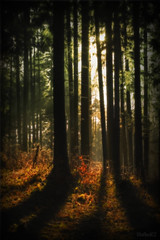 The Sun In The Wood (StafbulCZ) Tags: wood light sun nature canon colours czech rays gettyimages echy ef70200f4lusm eos400d fractalius flickrlovers kumburk stafbulcz jinsko jaroslavvondracek