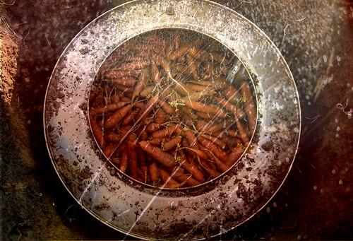 carottes-tondo