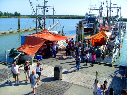 Fishing boats at Fisherman's Wharf in south arm of Fraser River