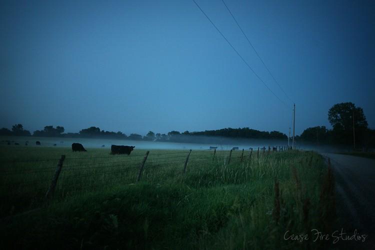 Bovine in the mist