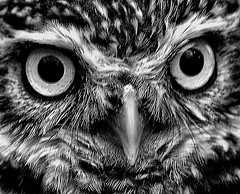 owl eyes (Ronnie jimmy) Tags: birds rons blinkagain