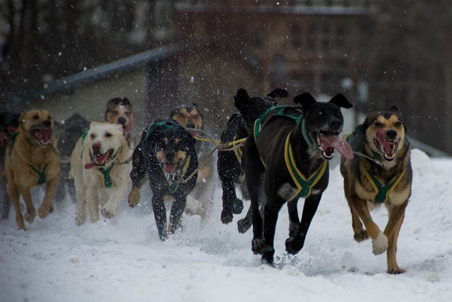 Sled Dogs #8 - 1