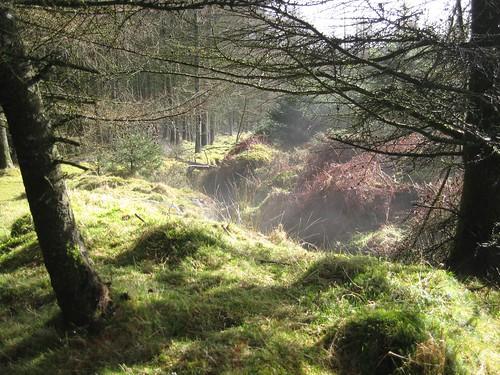 Dartmoor - Rising Mist