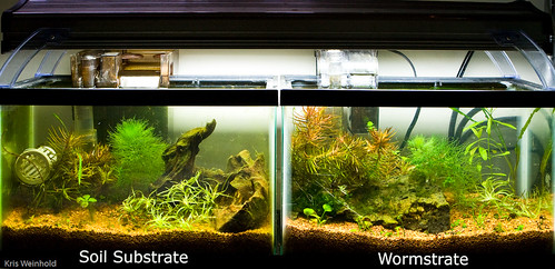 Wormstrate and Soil Substrate Experiment