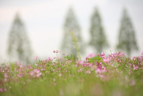 田んぼの春