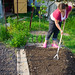 Preparing the soil for more salad